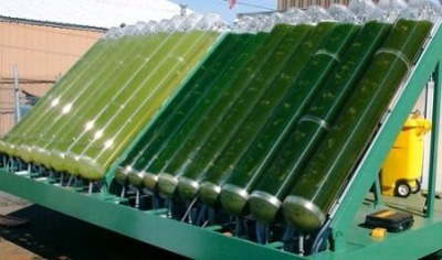 Post image for Algae Biofuel — No Longer the Next Big Thing?