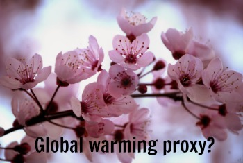 Post image for A Later Peak Cherry Blossom Date – Is DC's Global Warming Indicator Broken?